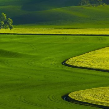 land of green