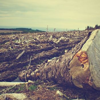 deforestation-405749__480